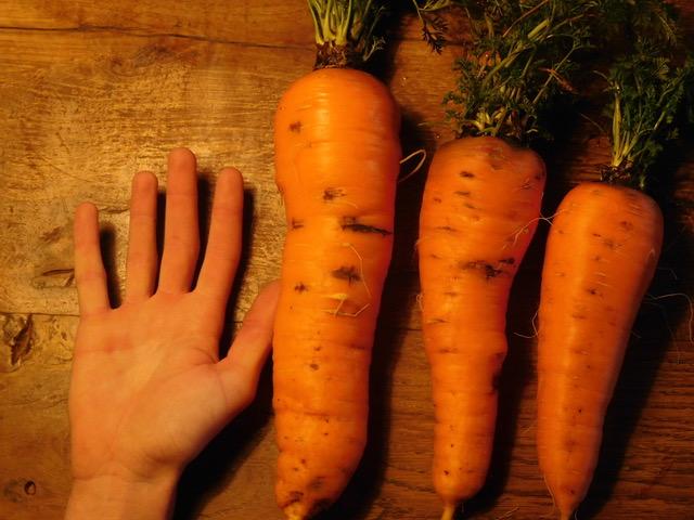 carottes monstrueuses roquecave